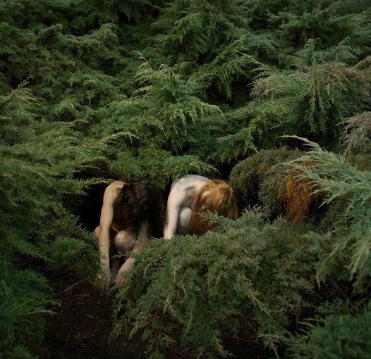 Juniper (Juniperus) in Winter.