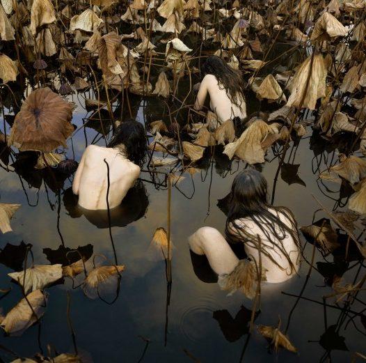 Sacred Lotus (Nelumbo Nucifera) in Autumn.