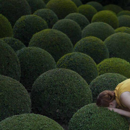 Jardinjaune.